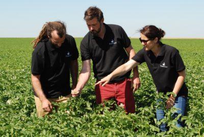 Dans les champs de pommes de terre